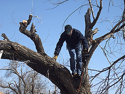 At New Light UMC in Lawton, Steven Clay of Carnegie UMC maneuvers carefully while trimming a tree damaged by the late January ice storm.